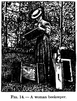 Beekeeping - E.F. Phillips - 1915 - illustration - woman beekeeper