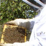 beekeeper field day